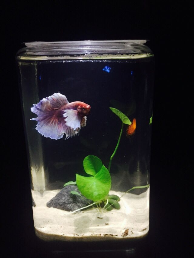 17 Best Images About Fish Tanks On Pinterest Water Terrarium Betta Fish Bowl And Vase