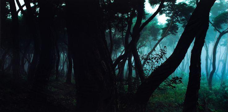 """BAE BIEN-U """"Pine Tree"""""""