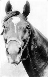 Man O' War | There was a thickness to Man o' War that probably came from his voracious appetite.