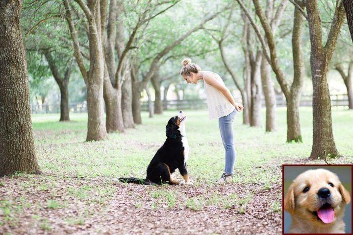 Dog Behavior Hiding Under Bed And Dog Training Courses Tafe Dog