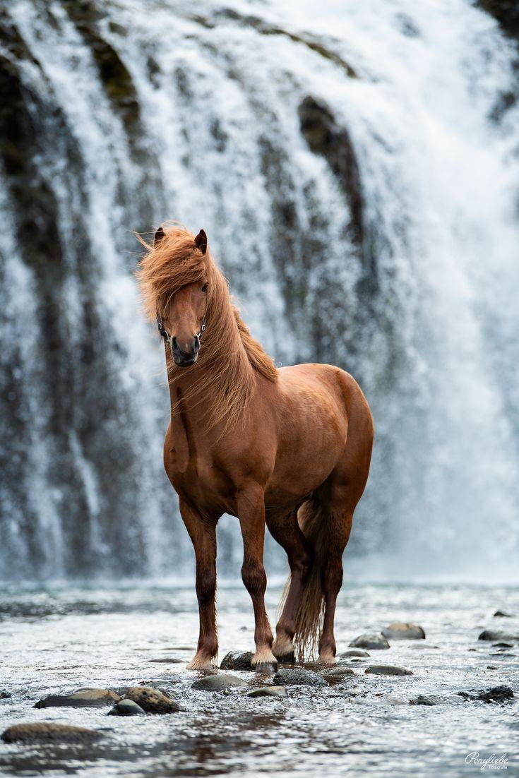Fotoshooting am Wasserfall. Haare im Wind schütte…
