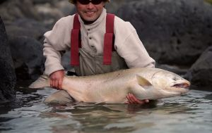 Salmon fishing in Patagonia is one of the ultimate testaments to the hardiness of the Pacific salmon species. Watch these beautiful fish in this video.