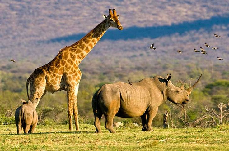 Johannesburg, South Africa - spot big game in the national parks