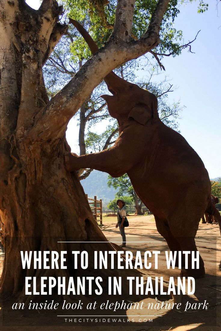 If you're planning a trip to Thailand, interacting with elephants might be at the top of your bucket list. If it is, make sure to read this post with information on the best place to ethically play, interact, and spend time with elephants in Thailand and why you should avoid others! Read on to get an inside look at the Elephant Nature Park of Chiang Mai, Thailand.