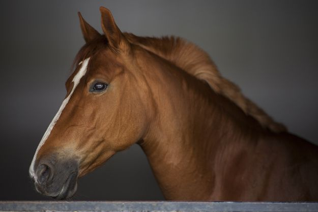 Primo piano di elegante cavallo marrone Foto Gratuite