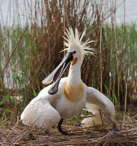 Фотосъемка птиц: