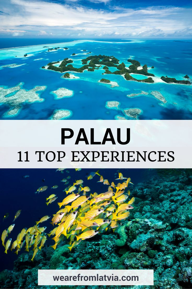 Things to do in Palau: 11 Top Experiences Not to Miss in Palau