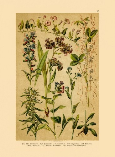 Beautiful Poster of Medicinal Plants - 薬草参考