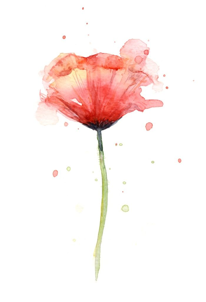 Red Poppy Watercolor Flower Art Print Poppies By OlechkaDesign