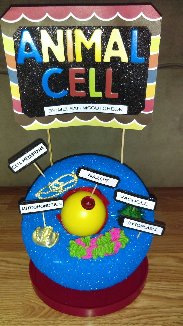 Animal cell with 5 organelles 5th grade project. | Animal ...