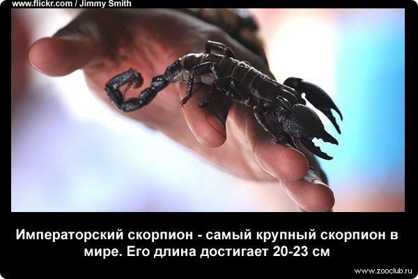 Удивительные факты о скорпионах