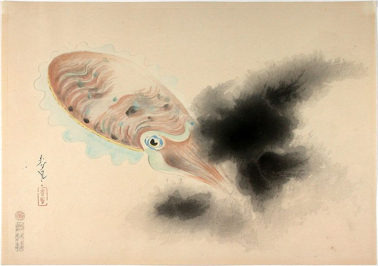 Bakufu_Ohno-Familiar_Fishes_of_Nippon-Squid-00036192-040510-F12.jpg (1200×845)