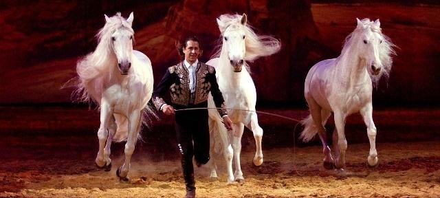 Actualité spectacle cheval & équitation : Salon du cheval 2012 : Spectacle «La nuit du cheval»