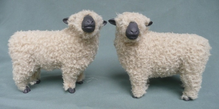 The Shropshire breed originated in the counties of Shropshire and Staffordshire in central western England.    It was was developed by breeding the native black-faced sheep that were known as Longmynd with Southdowns to breed out the coarseness and horns. It was later crossed with Leicesters and Cotswolds to improved the length of the wool and give size to the sheep.