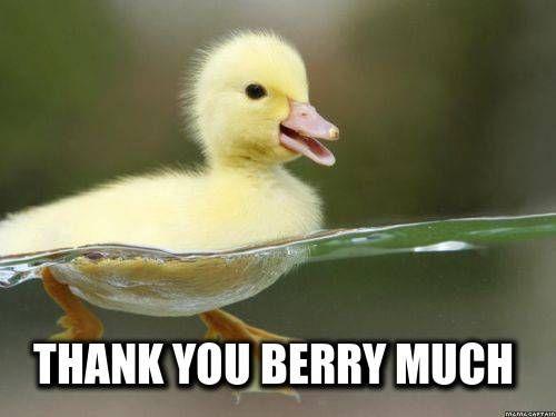 6cdbfbe0f7fcc08463b3e92165beb856 baby ducks a lady best 25 duck memes ideas on pinterest funny meems, funny,Duck Meme