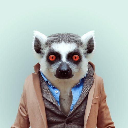 http://www.juxtapoz.com/current/zoo-portraits-by-yago-partal