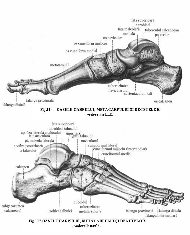37 best anatomy images on Pinterest | Anatomy, Human anatomy and ...