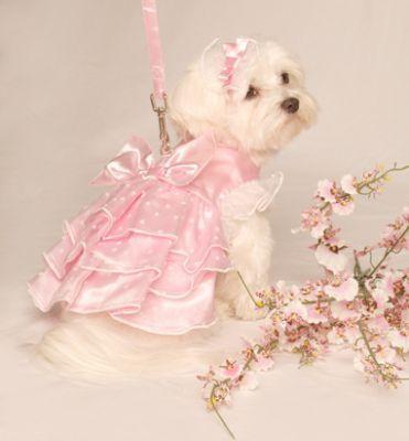 dog dresses -