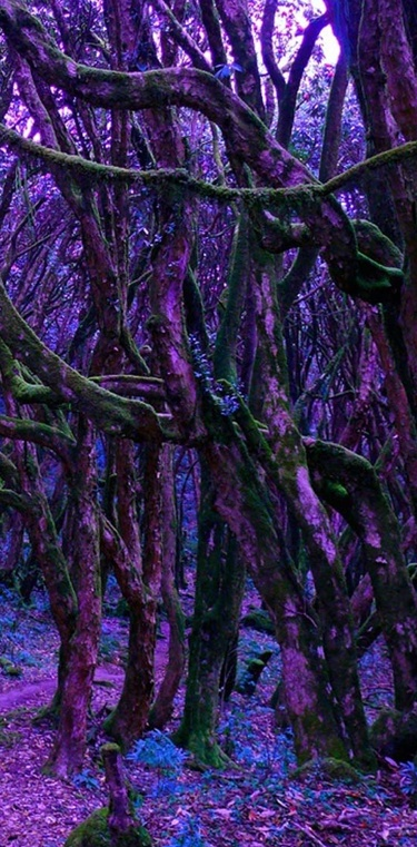 Magical Fairy Forest - fairies? aw