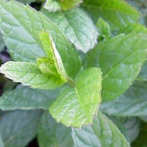 22 best images about plantas de sol sun plants on - Plantas resistentes al frio ...