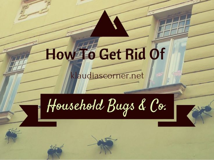 Home Defense Pest Control - How To Get Rid Of Common Household Bugs&Co.Even…
