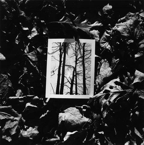 Kenneth-Josephson   Black and white Fibre