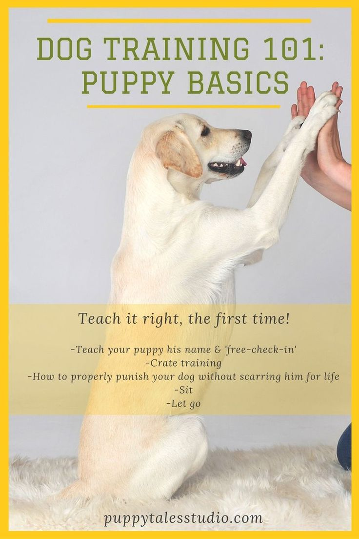 HOW TO: Dog Training 101 - Puppy Basics. Are you a new puppy parent? Whether you just gota puppy or an adult shelter dog, your new family member has a lot to learn. In this free course I want to share the bare basics with you. These are the essentials you need to teach your dog within the first weeks of his or her arrival. Click through to download this course on how to teach your puppy his name, crate training, how to properly punish your dog & some essential commands.