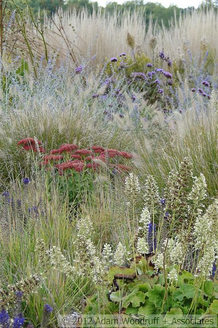 17 best images about residential gardens designed by adam for Wild ornamental grasses