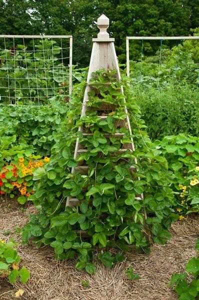 Strawberry trellis - The Complete Kitchen Garden via EllenOgden blog