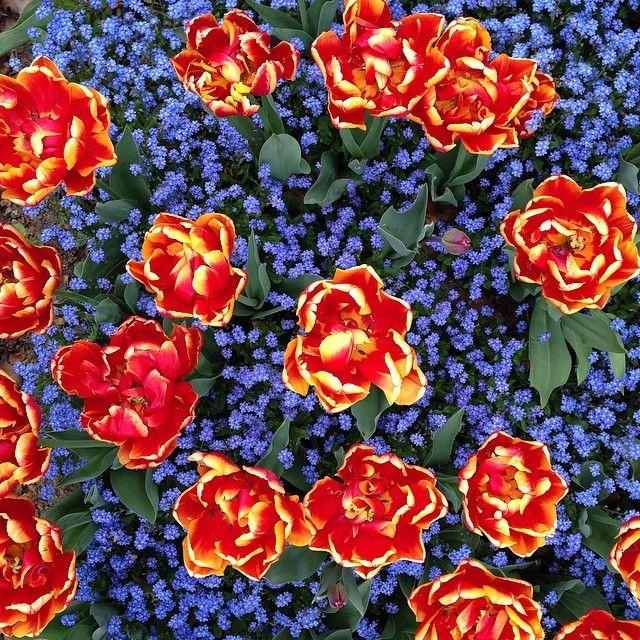 Farbenpracht #Flora #Köln #nofilter - @Dirk Steinmetz- #webstagram
