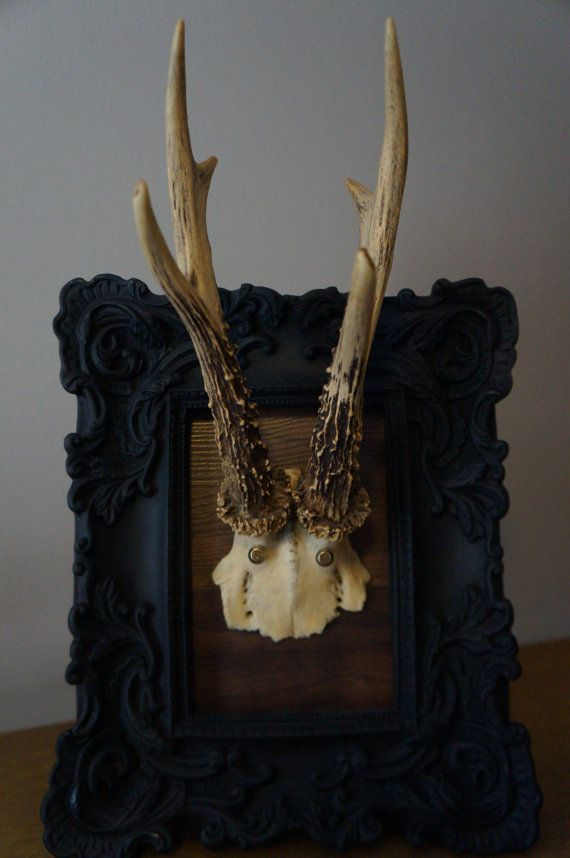 72 Best Images About Deer Antlers On Pinterest Wall