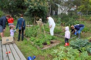 Community Garden Information – How To Start A Community Garden
