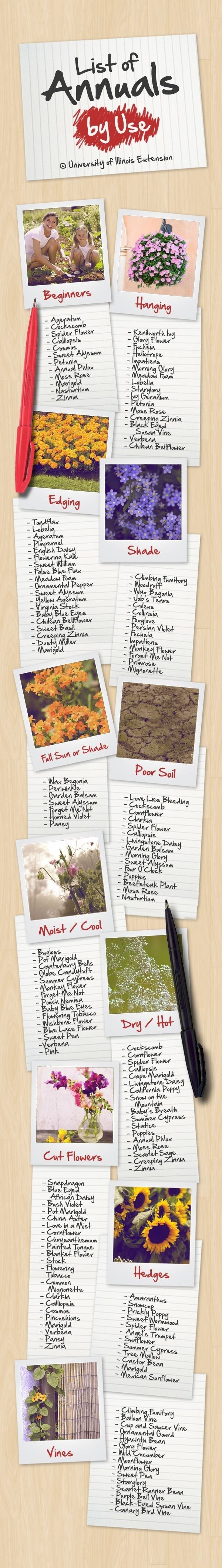 Here's a list of how you can use annuals (plants that you need to replant every year) in your garden. | 23 Diagrams That Make Gardening So Much Easier