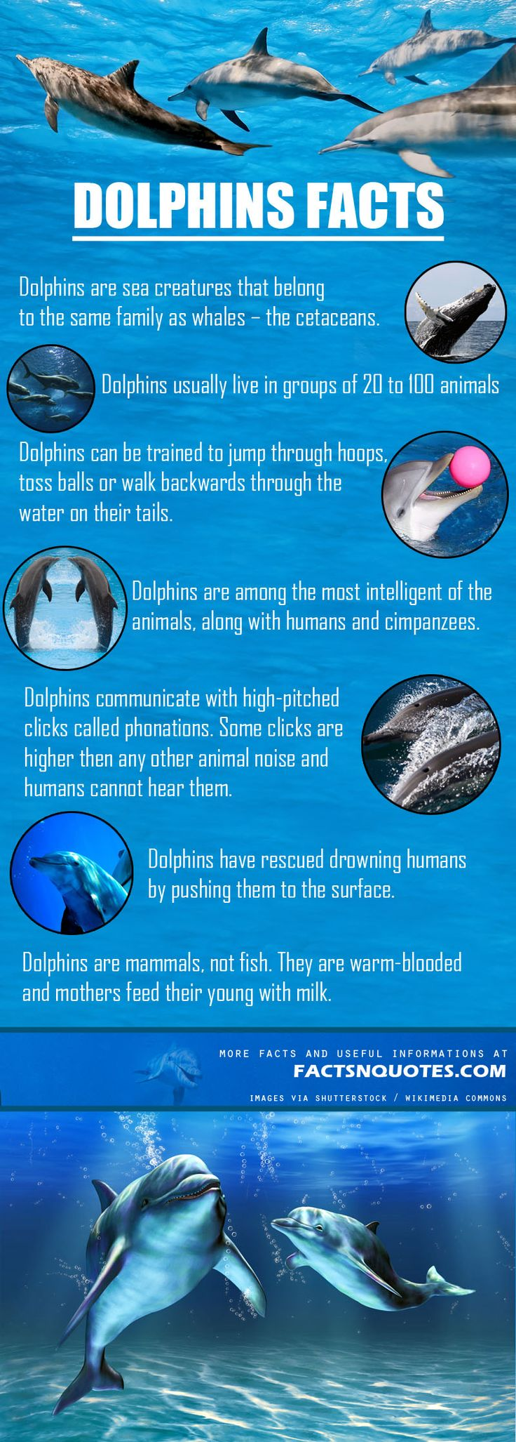 Interesting Dolphins Facts and Information