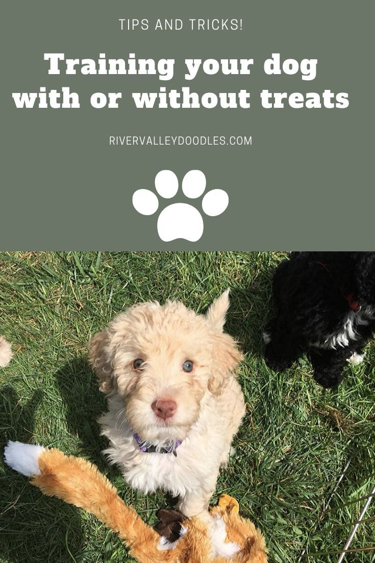 How to train your puppy with treats or not in 2020