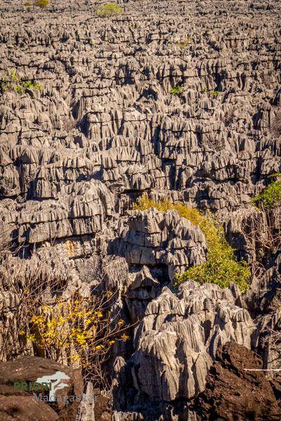 Die Tsingy von Ankarana im Norden von Madagaskar sind eindrückliche scharfkantige Kalkstein-Nadeln auf einer großen Fläche...sie sind bis zu 20 Meter hoch.