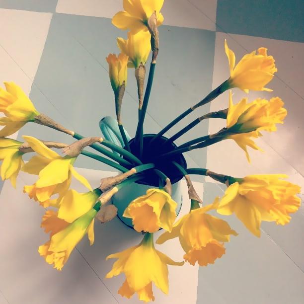 easter lilys, påskliljor