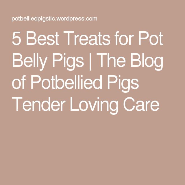 5 Best Treats for Pot Belly Pigs | The Blog of Potbellied Pigs Tender Loving Care