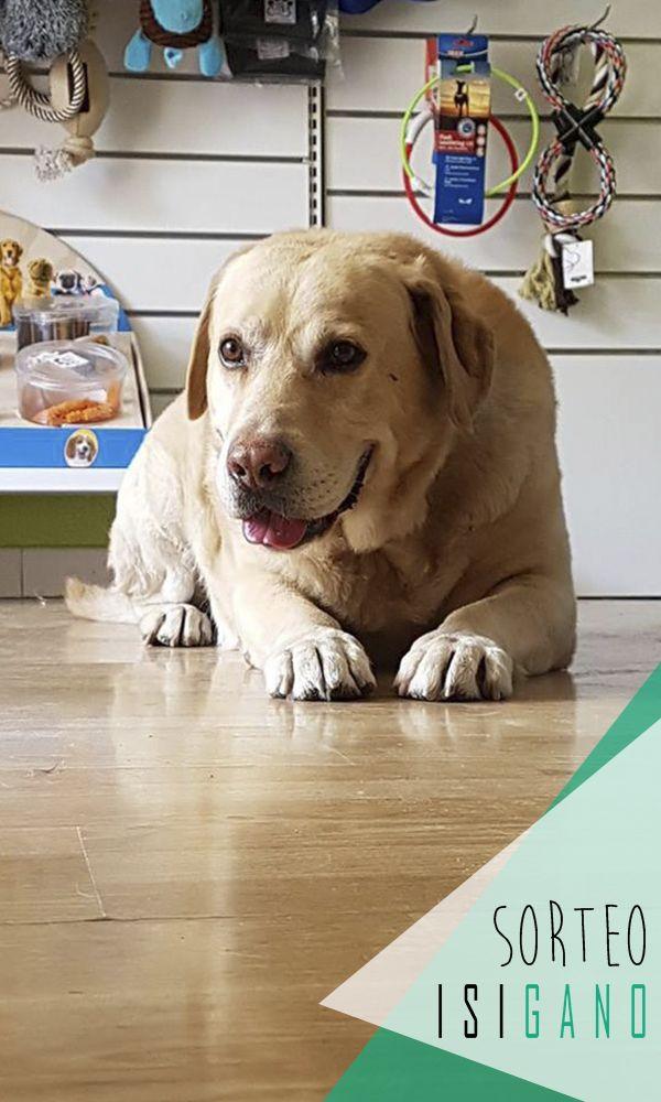 Puppy Fashion quiere premiaros con un servicio completo para tu mascota: peluquería y limpieza dental sin anestesia* valorado en 75€, la mascota la pones tú! #sorteo #gratis #sorteosgratis #sorteosmadrid #Madrid #suerte #luck #goodluck #premio #free #regalo #concurso #mascotas #pets #Móstoles