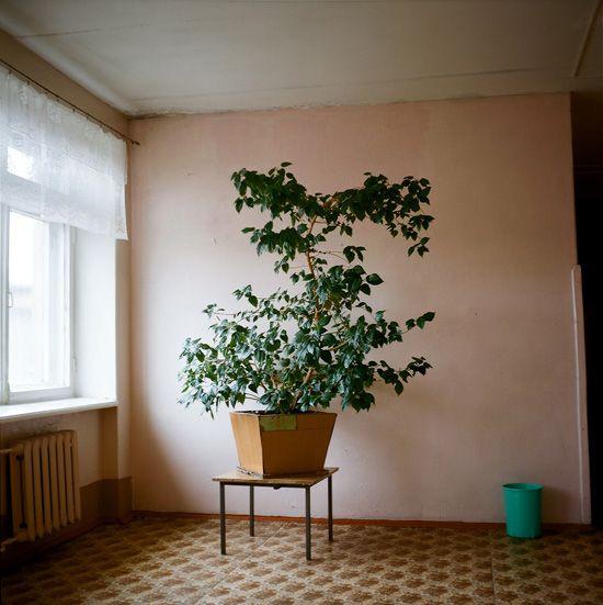 by Igor Starkov