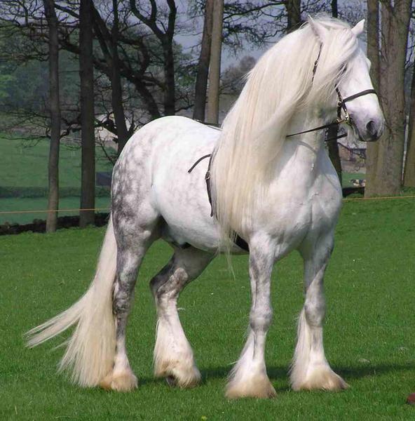 A legcsodálatosabb lófajták:  Percheron