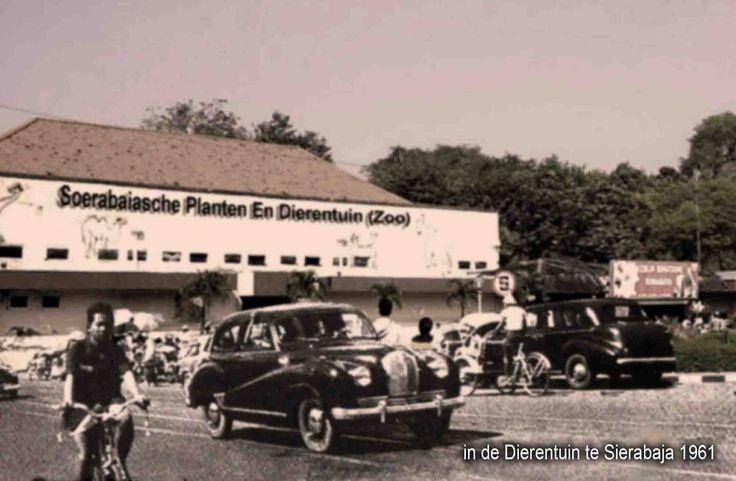 Kebun Binatang Surabaya (KBS) 1950