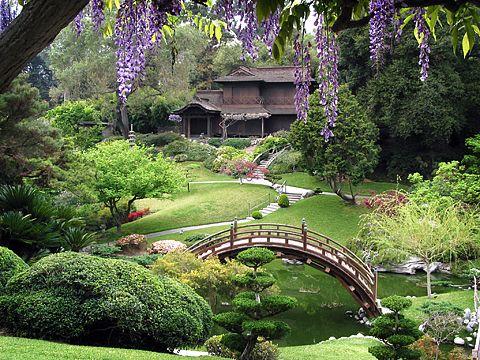 Google Image Result for http://thephotogardenbee.com/wp-content/uploads/2010/03/Japanese-wisteria-Spring.jpg