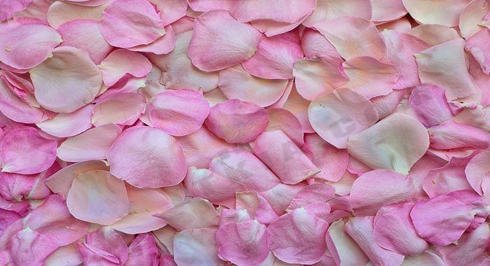تفسير حلم رؤية اللون الوردي في المنام دلالات اللون الوردي في الحلم للعزباء والمتزوجة والحامل والرجل Beautiful Rose Flowers Pink Background Flower Backgrounds