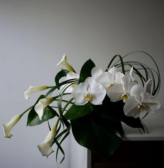 calla - orchidée