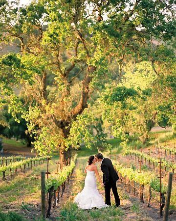 A vineyard wedding in Los Olivos, CA
