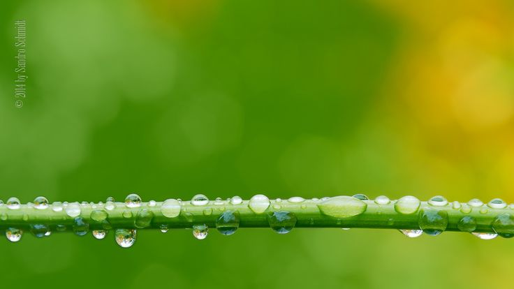 Waterdrops by Sandro Schmidt on 500px