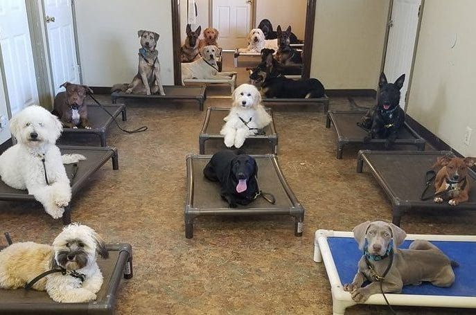 Thunderhawk Canine Llc Dog Training Boarding And Playcare