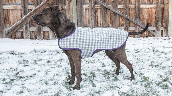 You're not the only one who needs a coat on a cold winter day. Your dog might appreciate an extra layer when going out for a winter walk, too. Professor Pincushion shares a video showing ho…