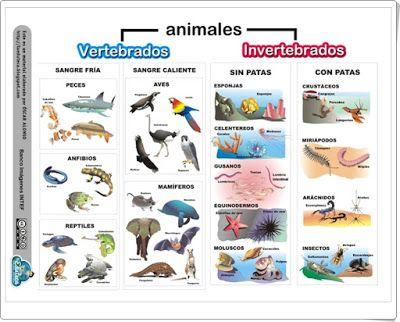 """Unidad 4 de Ciencias de la Naturaleza de 5º de Primaria: """"Los animales"""""""